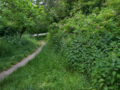 Hasenheide rixdorfer-hoehe 2021-06-06 a.png