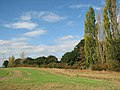 Hedgerow and trees bordering back gardens - geograph.org.uk - 1536723.jpg