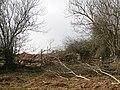 Hedging, Haye Park - geograph.org.uk - 964999.jpg