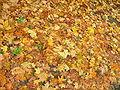 Herbstlaub-rr.jpg
