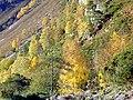 Hillside at Strathfarrar - geograph.org.uk - 1029355.jpg