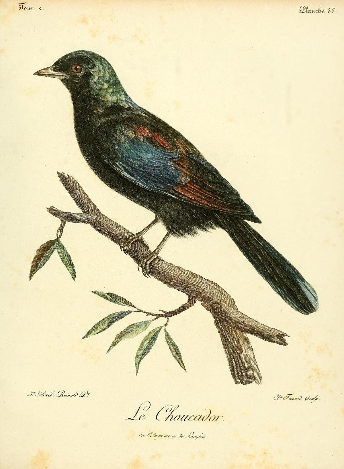 Principe starling wikidata for Histoire des jardins wikipedia