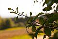 Hohenegg-11052015-09.JPG