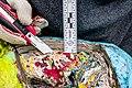 Holbeinpferdle Restaurierung jm95770.jpg