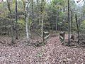 Holly Springs NF trail 4.JPG