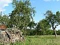 Holzstapel im Obstgarten - geo.hlipp.de - 2233.jpg