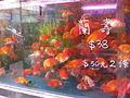 Hong Kong Goldfish Market IMG 5466.JPG