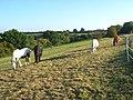 Horses, Beacon's Bottom - geograph.org.uk - 1014628.jpg