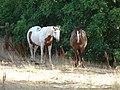 Horses near the Spanish Fork River Trail, Jul 15.jpg