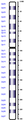 Human chromosome 02 from Hemabase database.png