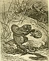 Hunting and trapping stories; a book for boys (1903) (14595847908).jpg