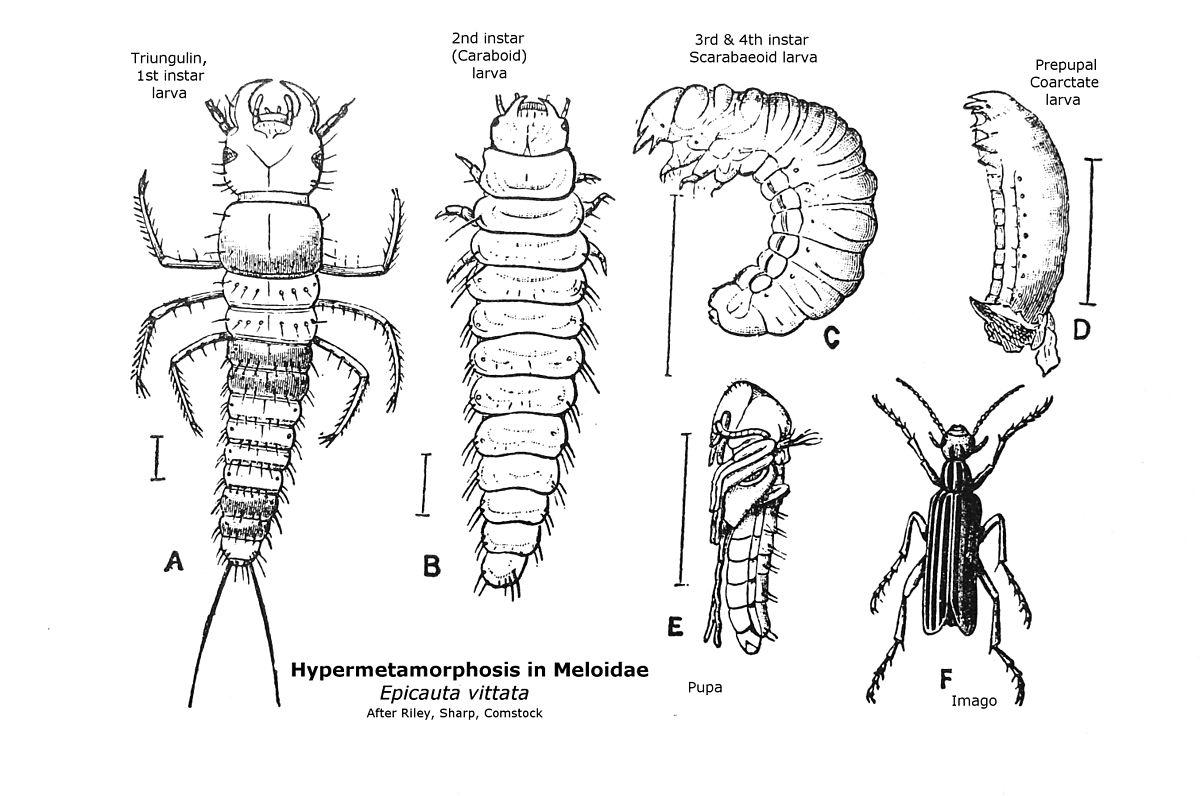 cucaracha 動画 変態