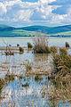Ichkeul Lake.jpg