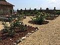 Il giardino delle rose di Villa Guardatoia.jpg