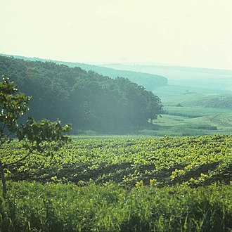 Șaptebani - Image: In the Rascani district (1980). (25423282820)