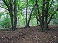 Inside Oldbury Woods - geograph.org.uk - 1531658.jpg