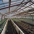 Interieur potplantenkas - Aalsmeer - 20404726 - RCE.jpg