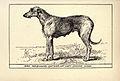 Irish Wolfhound BDL.jpg