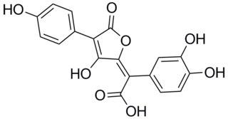 Isoxerocomic acid