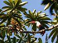 Iwokrama Rainforest, Guyana (12179354776).jpg