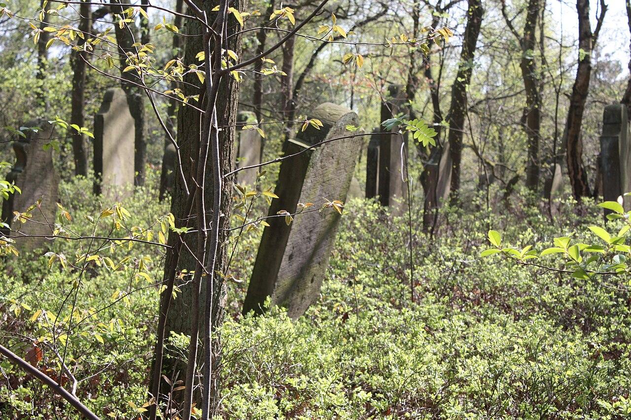 Jüdischer Friedhof Hoyerhagen 20090413 031.JPG