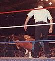 Jake Roberts DDT.jpg