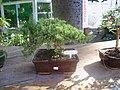 Jardim Japonês - panoramio (2).jpg