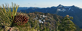Jeffrey pine Siskiyou Wilderness.jpg
