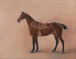 Study of a Saddled Bay Hunter