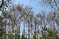 Just beauty of Saatchori National Park, Hobigonj, Sylhet, Bangladesh.jpg