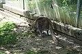 Känguru an Wand Zoologischer Garten Hof 08062019.jpg