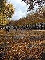 Köln-Neumarkt-im-Herbst-67.JPG