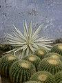 Kalimpong cacti etc.jpg