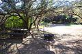 Karoo National Park 2014 43.jpg