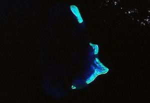 Kenn Reef - Satellite image of Kenn Reefs