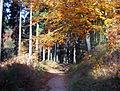 Kirkeler Wald 2003-11-06 01.JPG