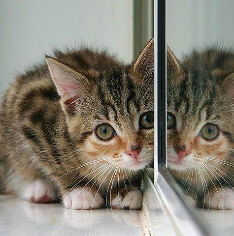 Katze & Spiegel