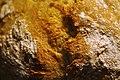 Koldhævet hvedebrød (5081456727).jpg