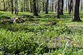 Koplipargi kivi. 29.jpg
