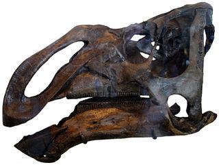 <i>Kritosaurus</i> genus of reptiles (fossil)