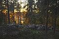 Kylmäkorvenkallion pronssikautinen hautaröykkiö 01.jpg
