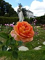 La roses et la statue au jardin du thabor - panoramio.jpg
