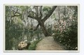Lake, Magnolia on the Ashley, Charleston, S.C (NYPL b12647398-69556).tiff