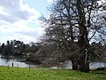 Lake and island, Bicton College - geograph.org.uk - 364376.jpg
