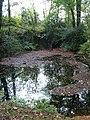 Lake in Boringdon Park Wood - geograph.org.uk - 268371.jpg