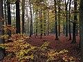 Landscape-IMG 6370.JPG