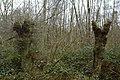 Landschap De Stroopers te Kemzeke - 371903 - onroerenderfgoed.jpg