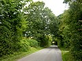 Lane through trees - geograph.org.uk - 1429297.jpg