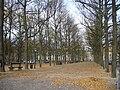 Lange Voorhout 2009.JPG