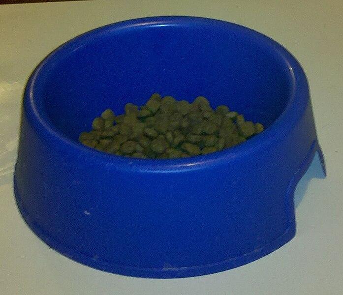 miska z karmą dla psa